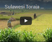 sulawesiyoutube